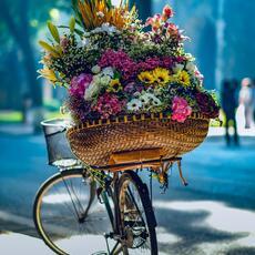 Nos 5 plus beaux itinéraires à vélo en France